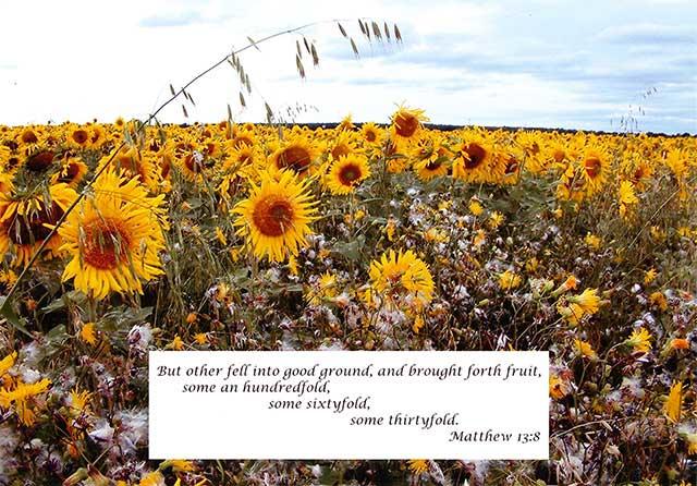 Hearts Open Like Sunflowers 04