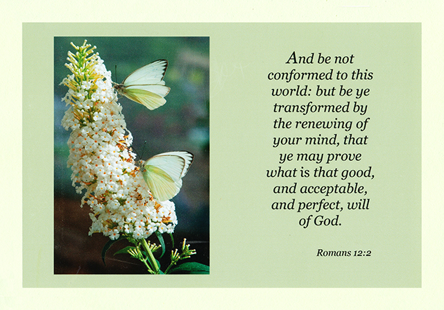 Transformed by the Renewed Mind 14