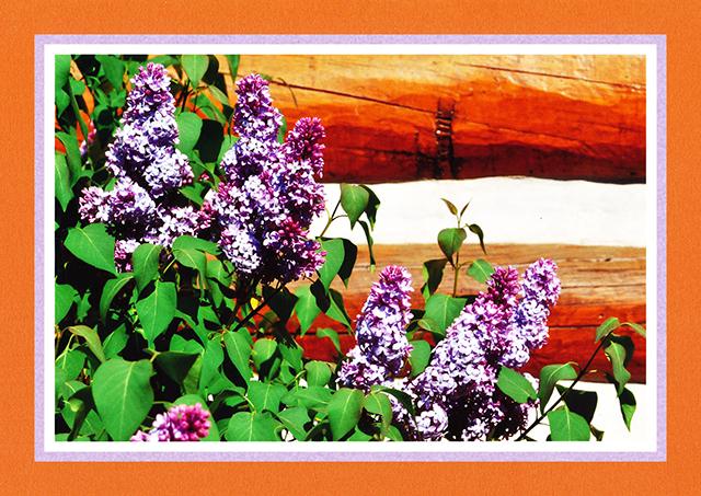 Spring Flowers 09