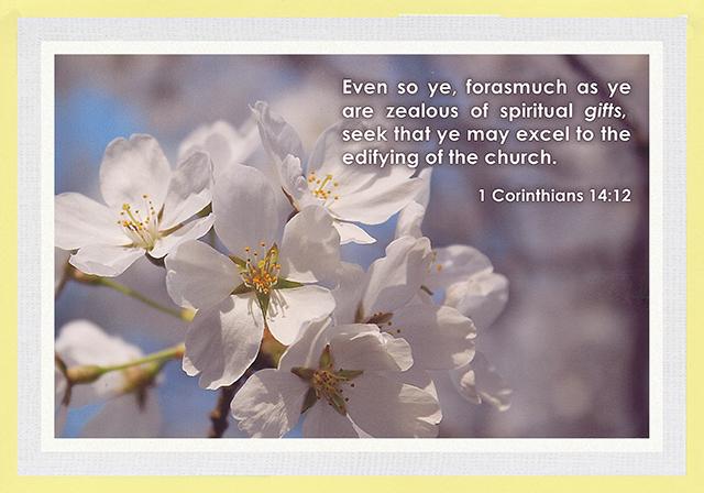 Illustrating the Church Epistles 12